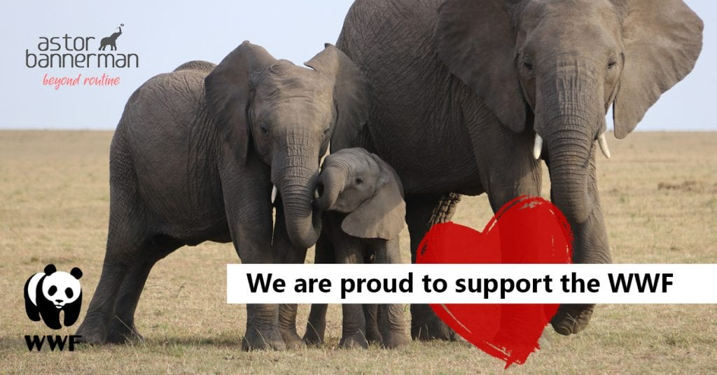 As a symbol of our love for Elephants this Valentine's Day, Astor Bannerman have adopted an elephant through the World Wildlife Fund for Nature (WWF) - The start of a long-lasting relationship.#wwf #elephants #wildlife #givingback #beyondroutine #nature #animals #elephantlove